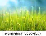 grass. fresh green spring grass ... | Shutterstock . vector #388095277