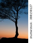 tree silhouette at sunset | Shutterstock . vector #388158127