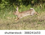 Stock photo wild cute rabbit is jumping on meadow 388241653