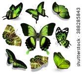 Nine Green Butterflies On Whit...