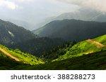 Amazing Wild Nature View Of...