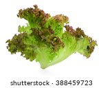 Fresh Red Oak Lettuce Isolated...