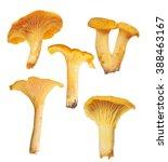 set of yellow chanterelles...   Shutterstock . vector #388463167