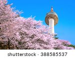 Seoul Tower And Pink Cherry...