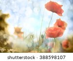 poppy flower in the sky  | Shutterstock . vector #388598107
