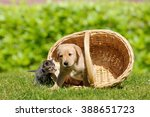 Stock photo dog and cat with basket on meadow 388651723