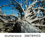 Driftwood Tree Old Roots A Dea...