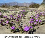 Small photo of Desert Sand Verbena - Abronia villosa