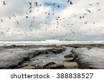 Storm Clouds And Sea Birds Ove...