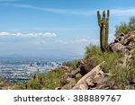 A Saguaro Cactus Stands Watch...