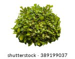 Green Bush Isolated On White...