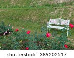 white bench and rose flower  in ... | Shutterstock . vector #389202517