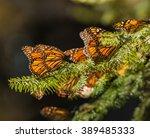 monarch butterfly migration in... | Shutterstock . vector #389485333