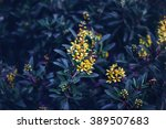 beautiful fairy dreamy magic... | Shutterstock . vector #389507683