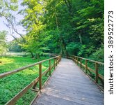 wooden path in green forest | Shutterstock . vector #389522773