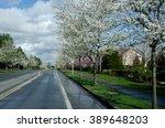 Asphalt Road Of A Residential...