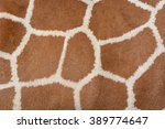Animal Skin Background Of The...