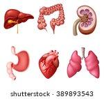 internal human digestive system ... | Shutterstock . vector #389893543
