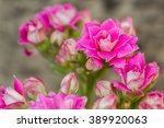 kalanchoe flowers with green... | Shutterstock . vector #389920063