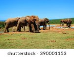 Herd Of Elephants At A Waterin...