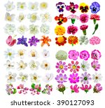 buds of colorful flowers... | Shutterstock . vector #390127093