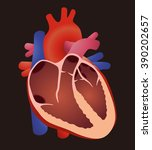 diagram of human cardiac... | Shutterstock .eps vector #390202657