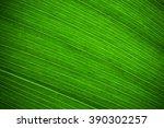 leaf texture.  leaf texture. | Shutterstock . vector #390302257
