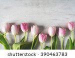 pink tulips on a white... | Shutterstock . vector #390463783
