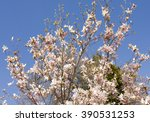 branches with pink magnolia... | Shutterstock . vector #390531253