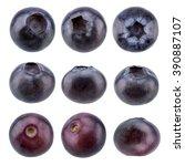 fresh blueberry isolated on... | Shutterstock . vector #390887107