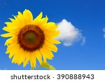 Sunflower On The Sky In The...