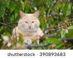 cream colored male cat sitting... | Shutterstock . vector #390893683