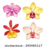 watercolor orchid flowers... | Shutterstock . vector #390985117