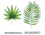 set of green tropical palm... | Shutterstock . vector #391003957