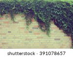 Wall Overgrown With Climbing...