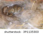 newborn bunny in the nest ... | Shutterstock . vector #391135303