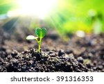 Small Plant On Pile Of Soil In...