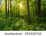 spring summer sun shining... | Shutterstock . vector #391520743