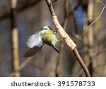 birds and animals in wildlife.... | Shutterstock . vector #391578733