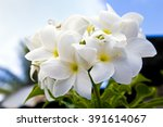 white tropical  flowers in ...   Shutterstock . vector #391614067