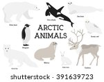 Arctic Animals Collection. Set...