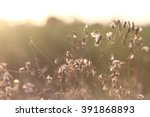 the flowers.the vintage.... | Shutterstock . vector #391868893