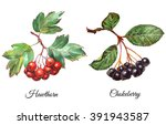 set of watercolor realistic... | Shutterstock . vector #391943587
