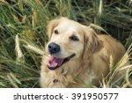 dog in the nature | Shutterstock . vector #391950577