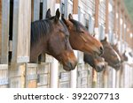 Horses In Stable  Beautiful...