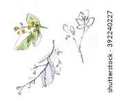 aglaia odorata. flower... | Shutterstock . vector #392240227