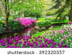 Beautiful Spring Flowers Near...