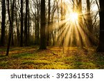 Stock photo sunset in the forest 392361553