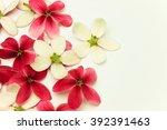 red flower of name rangoon... | Shutterstock . vector #392391463
