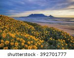 Table Mountain. During Spring...